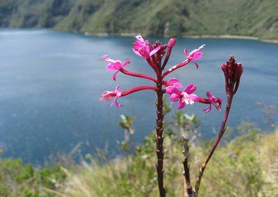 Equateur 2011 114