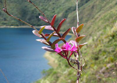 Equateur 2011 123